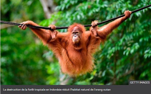 La destruction de la forêt tropicale en Indonésie